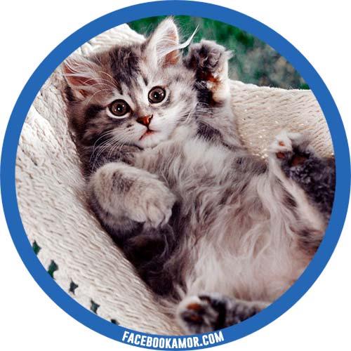 postales de gatito para perfil de facebook