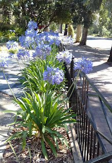 Image result for verges in Clarence Park