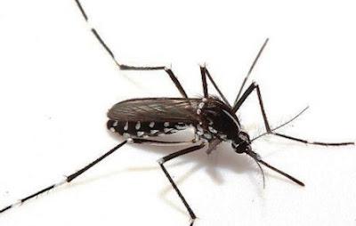 Virus Zika: Dampak, Gejala, Pengobatan