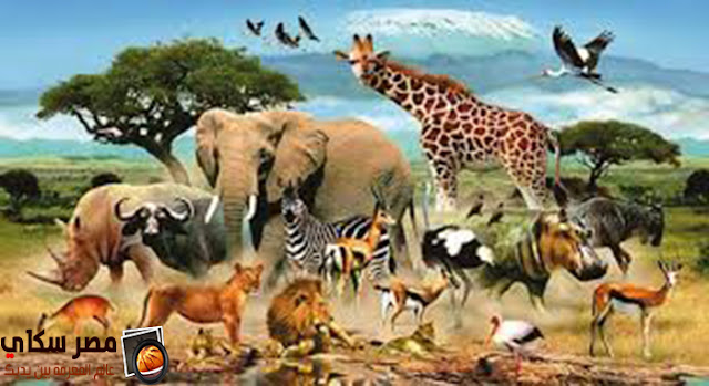 عجائب 5 أنواع من الحيوانات Wonders of animals