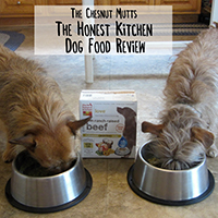 The Honest Kitchen dog food review