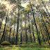 Cerita (Gagal) Camping Ke Hutan Pinus Gunung Pancar