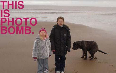 Animals Photo Bomb Photos