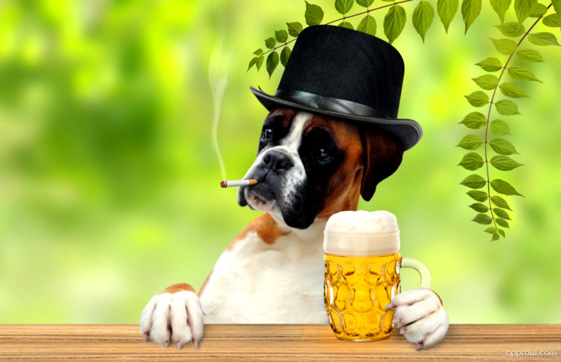Boxer Dog Wallpaper Hd Like Wallpapers