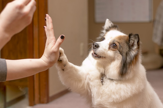 How can we encourage more people to use positive reinforcement in dog training - like this woman teaching her cute dog to high-five