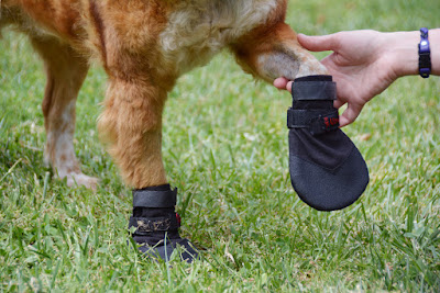 traction grip shoes for dogs