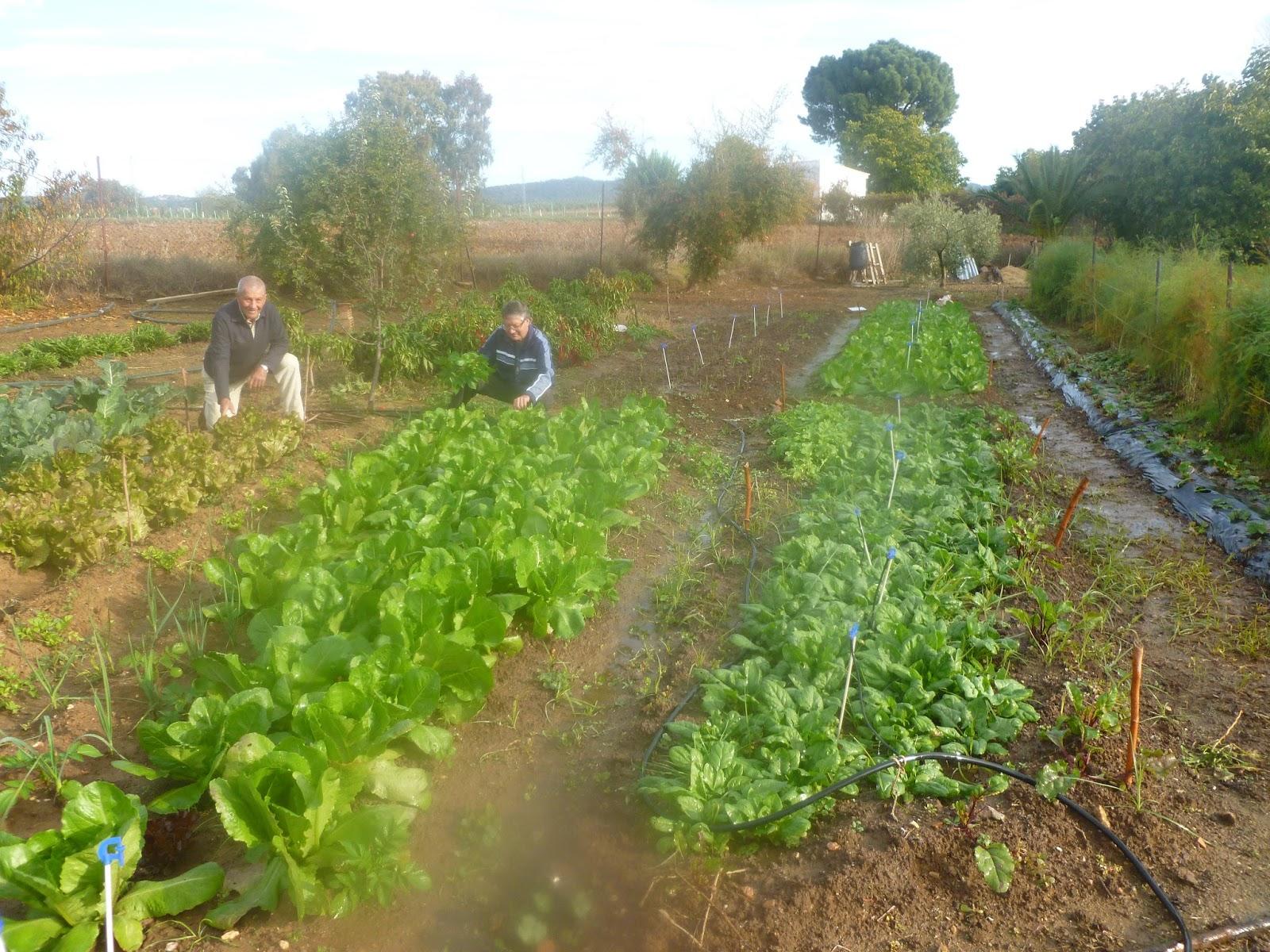 La puebla de los infantes un pueblo encantador el huerto for Preparar el huerto en invierno