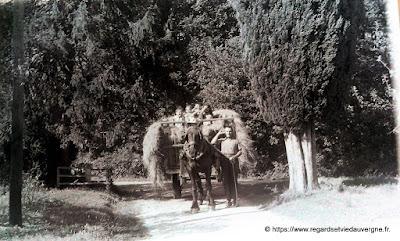 Photo ancienne noir et blanc les chevaux attelés au char de foin