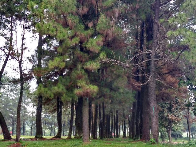 Taman Bilabong Permai Bojonggede