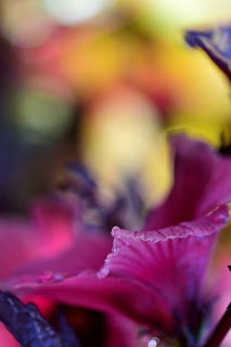 Cranberry Hibiscus Flower
