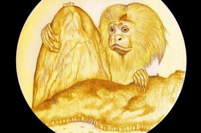 conservação, conservação ambiental, unidade de conservação, preservação, preservação ambiental, meio ambiente, preservação do meio ambiente, preservar, conservar, unidade de conservação, turismo ecológico, impacto ambiental, boticário, fundação grupo boticário, grupo boticário, turismo, olimpiadas, olimpíadas, jogos olímpicos, medalha olímpica, medalha olímpica, rio 2016, macaco, mico leão dourado, mico leão, mico-leão, mico leao