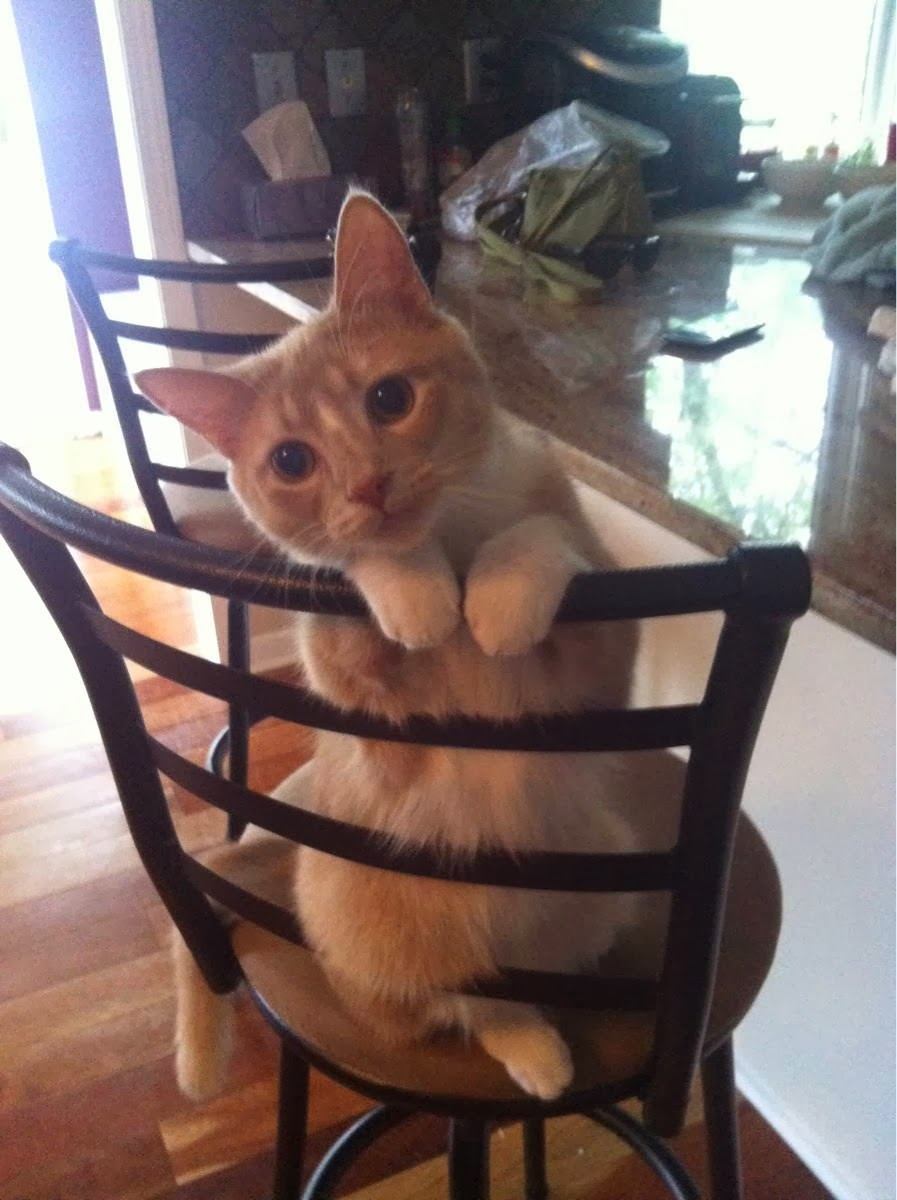 Funny cats - part 88 (40 pics + 10 gifs), cat sits on a chair being cute