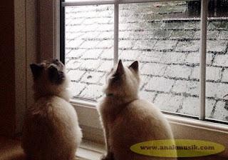 Lagu yang Cocok Didengarkan Saat Hujan