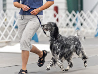 Begin with basic skills - dog obedience training