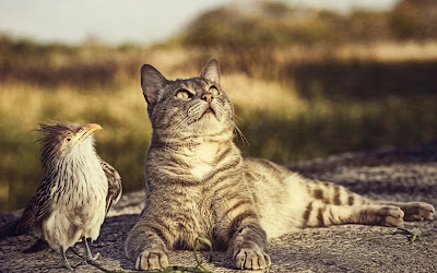 cat and bird widescreen hd wallpaper