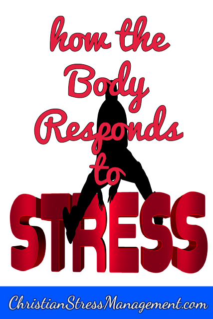 How the body responds to stress