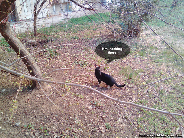 Cat Search Bird