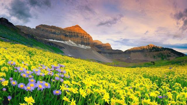 Vườn quốc gia Thung lũng các loài hoa ở Ấn Độ