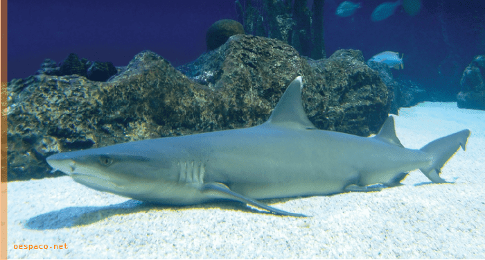 Shark tank, coloque um tubarão no seu tanque, insegurança e desafios