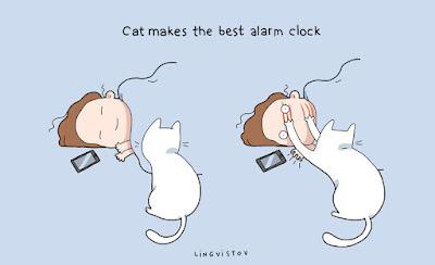 Uykucu-Kedi