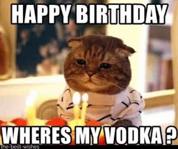 cat memes for bday