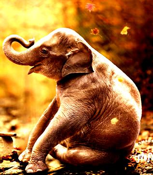 Menurut pengamatan, lagu tersebut adalah gambaran orang yang mempunyai jabatan besar namun tidak bertanggung jawab penuh terhadap bawahannya. Gajah yang mempunyai gading dua lengkap, seperti orang yang meiliki kekuatan besar, telinga lebar yang sudah mendengar segala sesuatu. Tapi mata kecil, adalah suatu ejekan karena walau oerang tersebut mempunyai jabatan dan kekuatan dia tidak peduli terhadap orang yang ada disekitar.