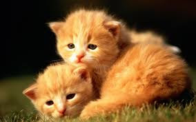 New Baby Cats Animal Hd Wallpaper27