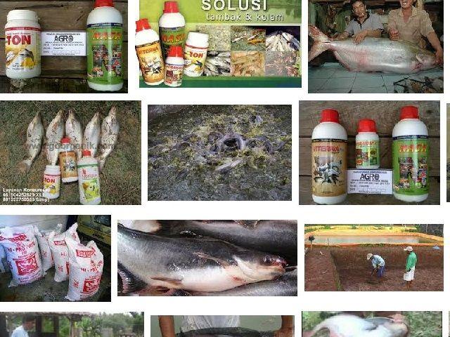 Hama dan Penyakit Ikan Patin