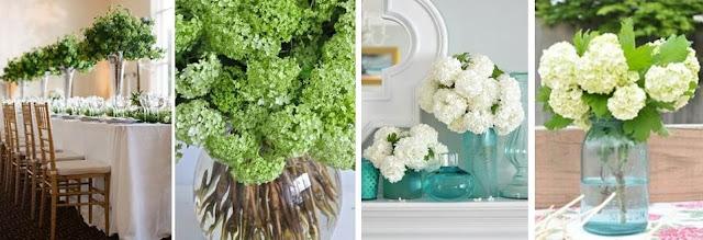 Viburnum bouquets