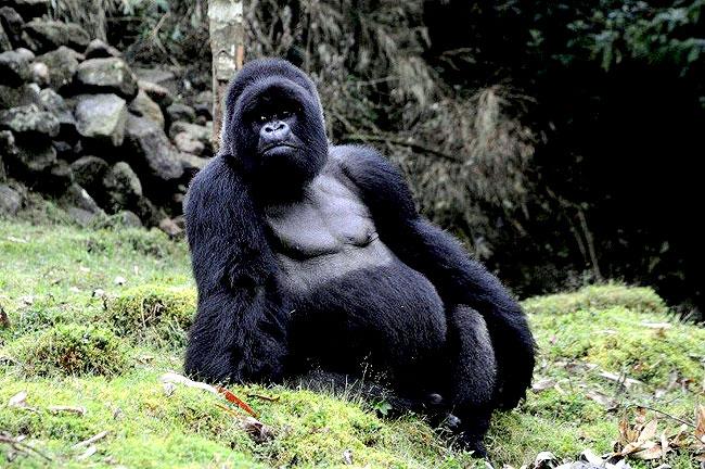 Gambar Buaya Terbesar Di Dunia Dunia Binatang Buas Related