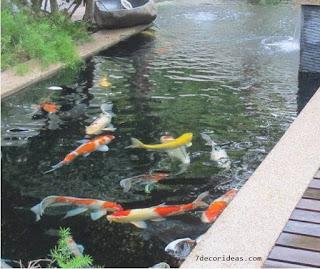 Desain Kolam Ikan Koi
