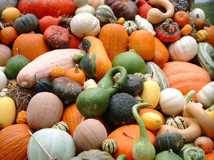 Image result for gourds and pumpkin