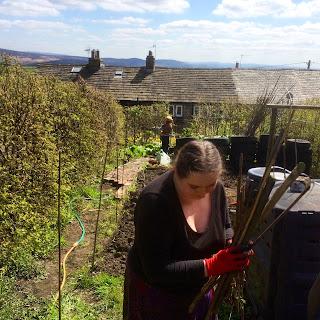 gardening, chickens, keeping chickens in gardens