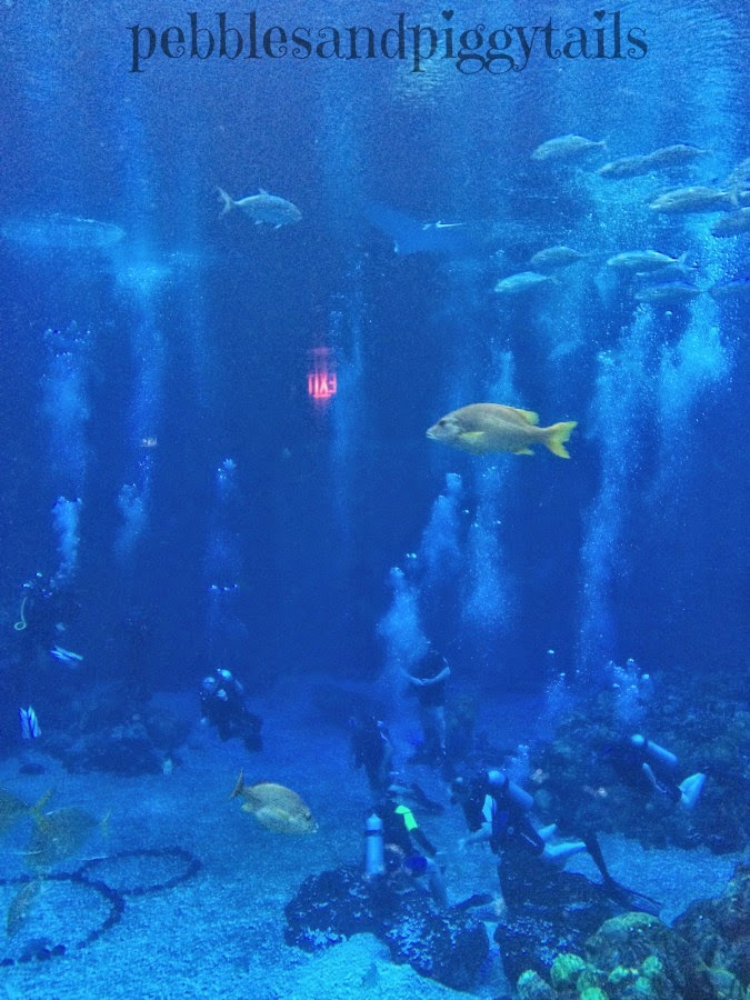 Cquest Diving Safaris: We Tried Disney's DiveQuest At Epcot
