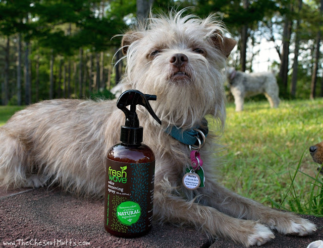 Bailey and Fresh Wave Odor Removing Spray