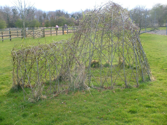 Creating living willow sculptures in the garden or school-making an igloo