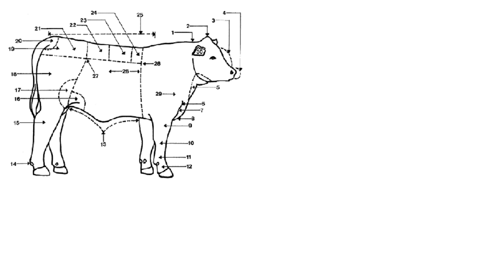 Large Animal Vet Beef Identification