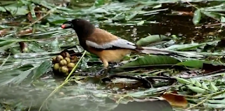 Bangladeshi Birds