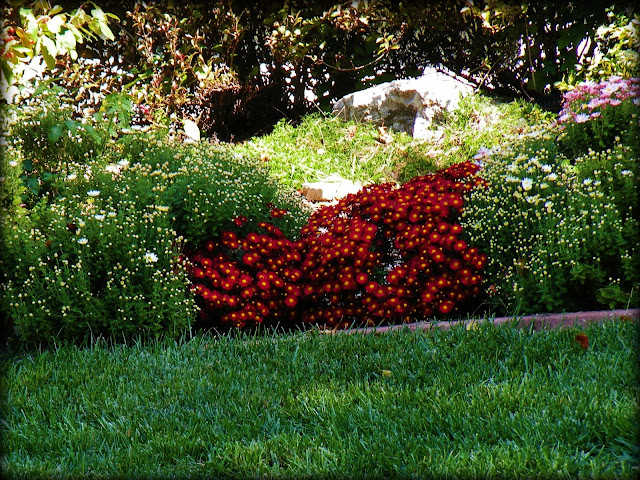 red flower bushes