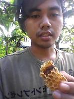 jual madu hutan