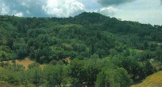 Bosco di Albereto
