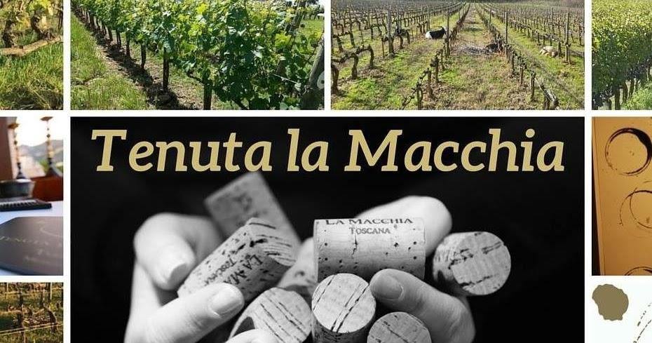 Tenuta la Macchia - Una giovane cantina a Montescudaio guidata da giovani, per i giovani!