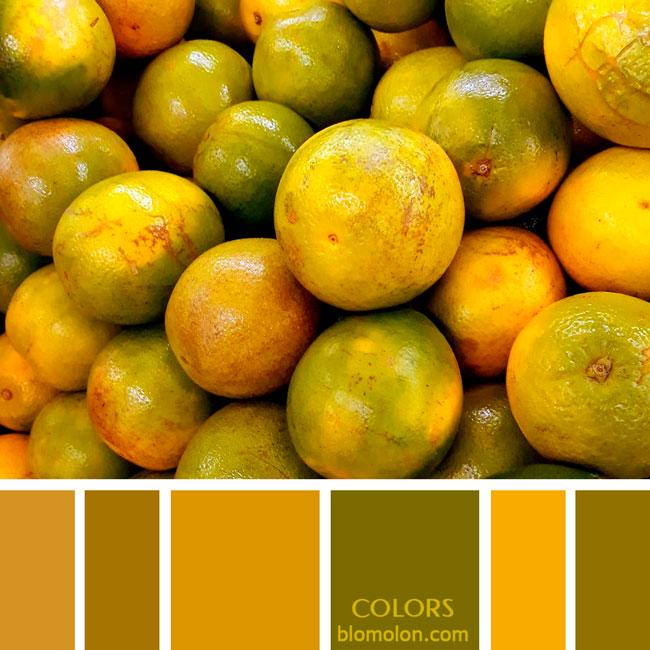 variedad_en_color_paletas_de_colores_86