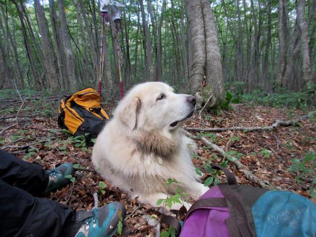 山の匂いを嗅いでいる犬。