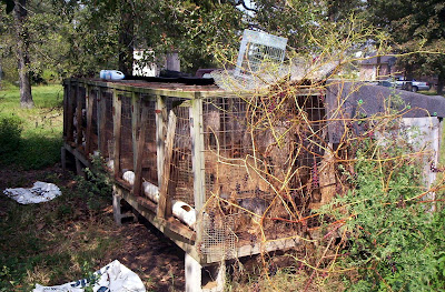 Puppy Mills and Backyard Breeders