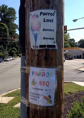 Funny Signs Lost Parrot