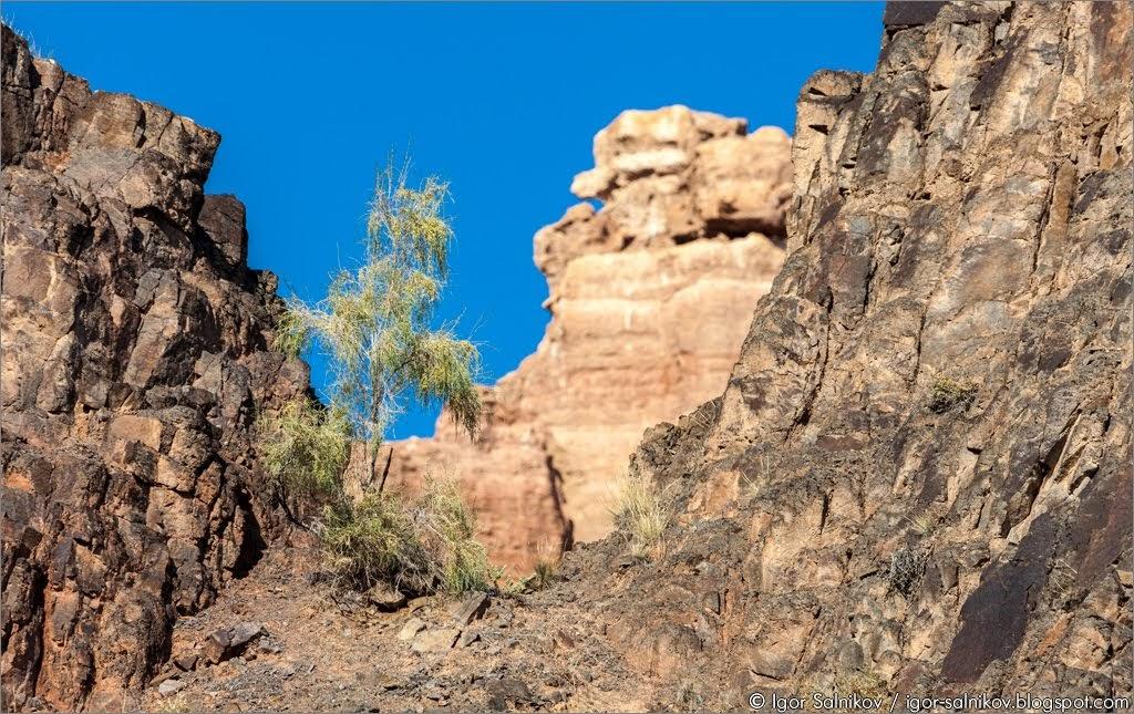 Чарынский каньон Казахстан