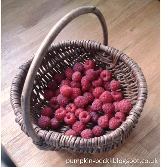 Summer Raspberries harvest