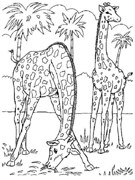 Coloring Pages Zoo Animals  Image Gallery For Group Of Wild Animals  Coloring Pages Free