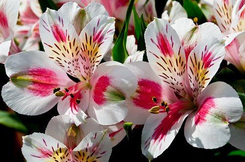 flower types